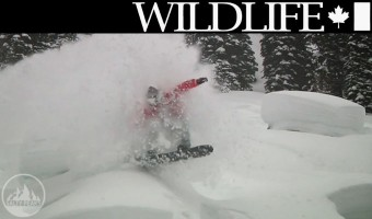 wildlife-snowboard-torrent